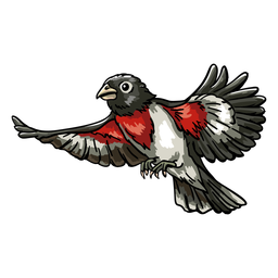 Realistic hand drawn rose throated grosbeak flying