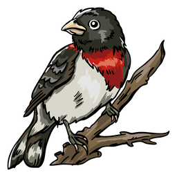 Realistic hand drawn rose throated grosbeak perching