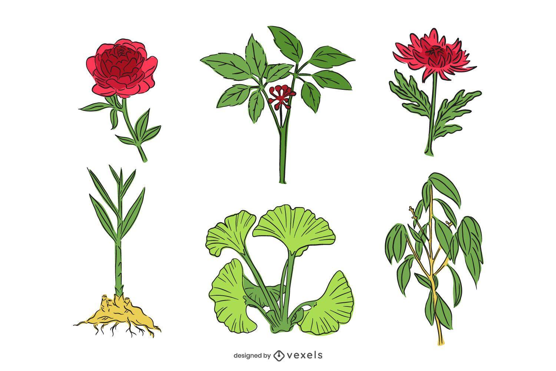 Conjunto de ilustra??o de ervas medicinais