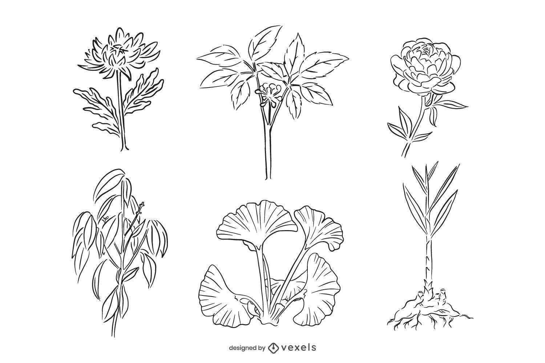 Conjunto de ilustración de trazo de hierbas medicinales