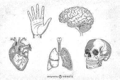 conjunto de anatomía humana dibujada a mano