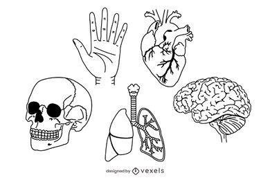 conjunto de anatomía humana de trazo