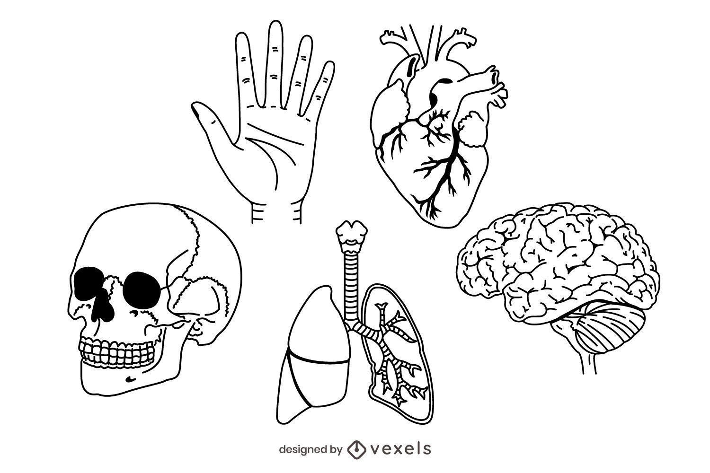 stroke human anatomy set