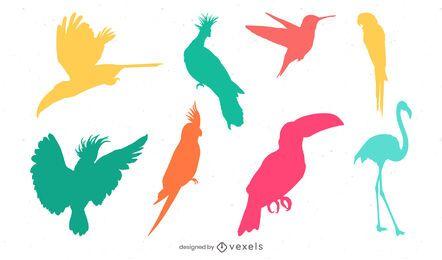 conjunto de silueta de pájaro tropical