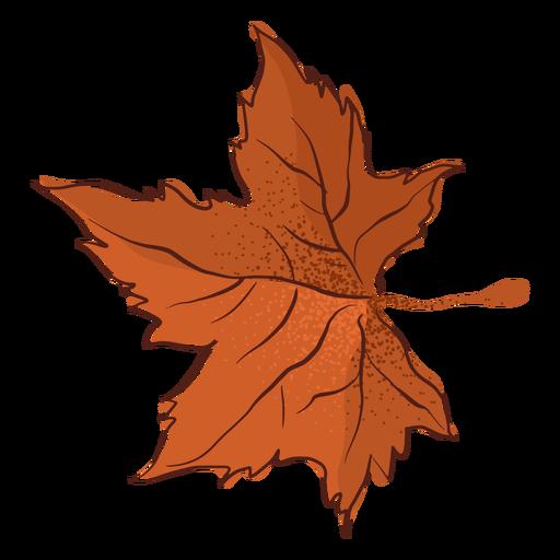 Autumn maple leaf type hand drawn