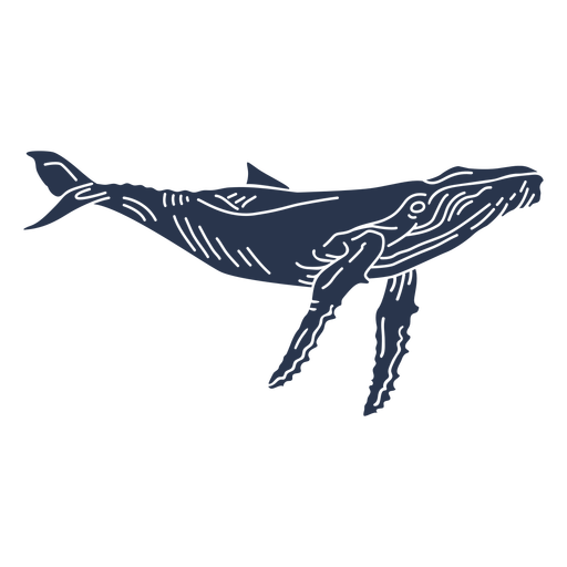 Blue whale sea animal silhouette