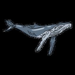 Blauwal Meerestier Schlaganfall