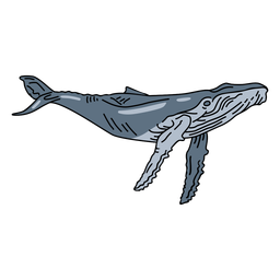 Blue whale sea animal stroke