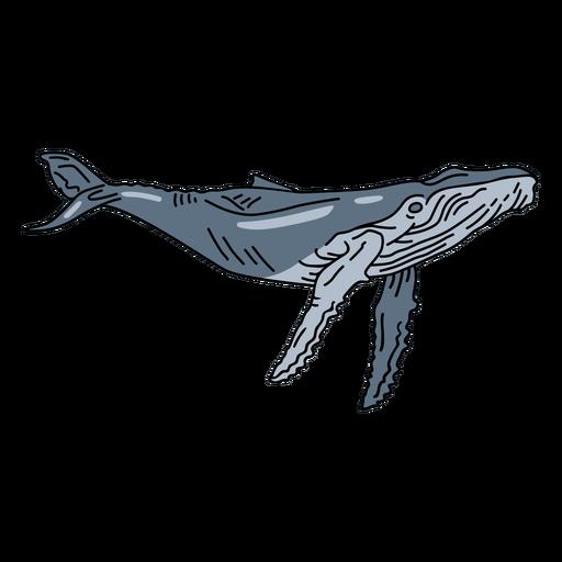 Golpe de animal marino de ballena azul
