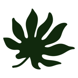Japanese aralia tropical leaf hand drawn