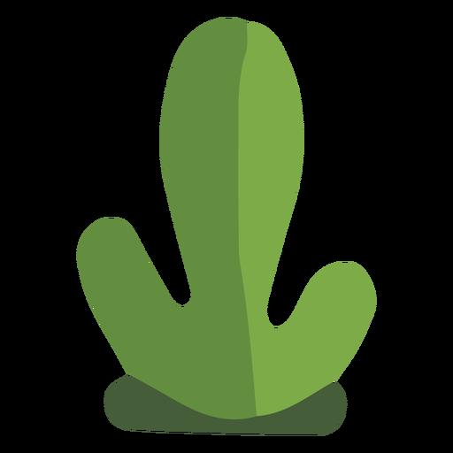 Planta duo cactus flat