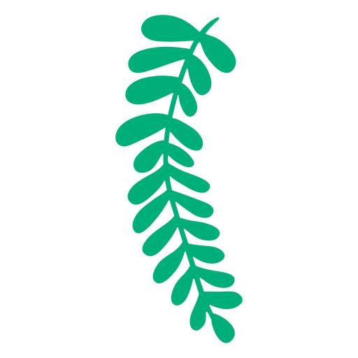 Royal fern leaf plant hand drawn Transparent PNG