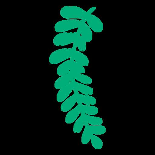 Royal fern leaf plant hand drawn