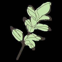 Rubber fig plant leaves stroke
