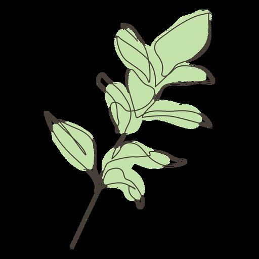 Trazo de hojas de planta de higuera de goma