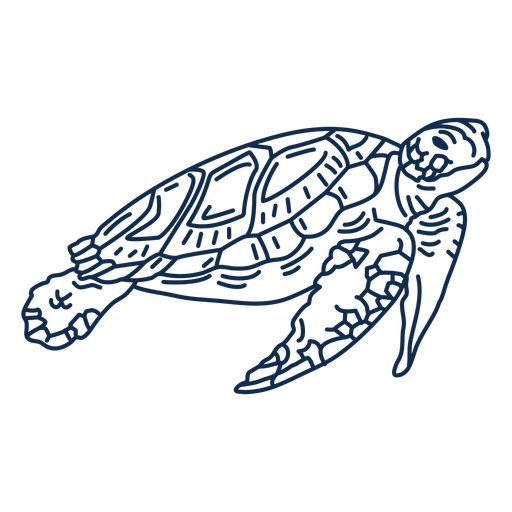 Tortuga de mar océano animal trazo