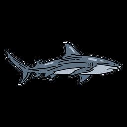 Peixe traço de tubarão