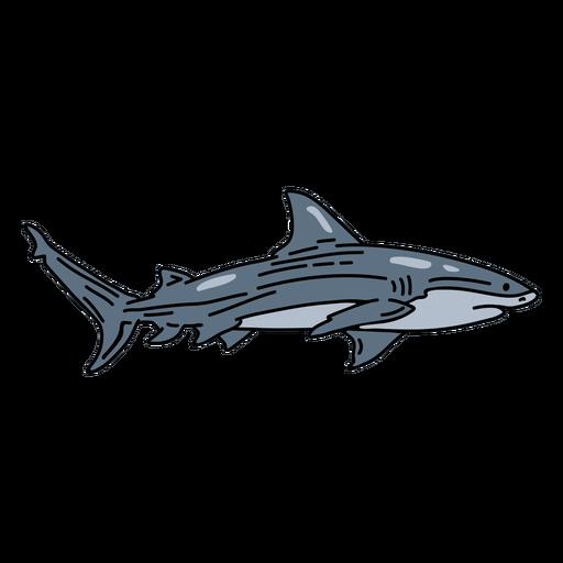 Peixe traço de tubarão Transparent PNG