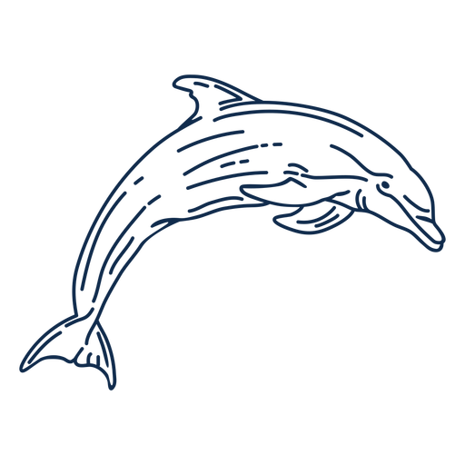 Stroke dolphin aquatic animall