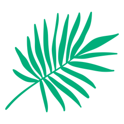 Tropical palm leaf hand drawn