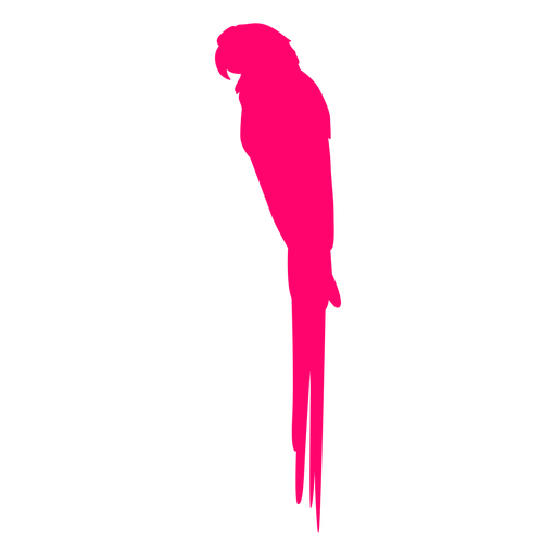 Tropical sitting bird silhouette