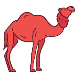Animal camelo plana