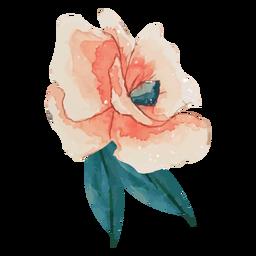 Acuarela rosa rosa