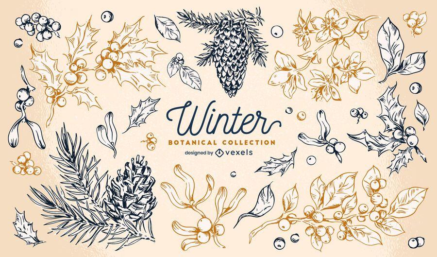 Coleção botânica de elementos de inverno