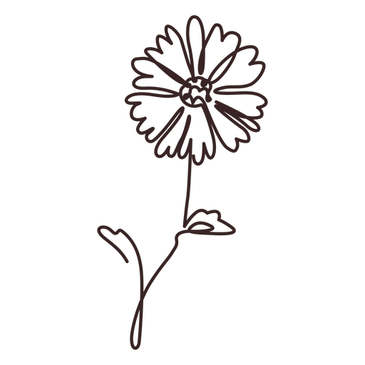 Daisy flower plant line drawing stroke Transparent PNG