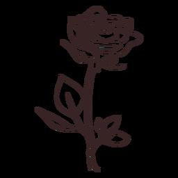 Planta frondosa flor de amapola