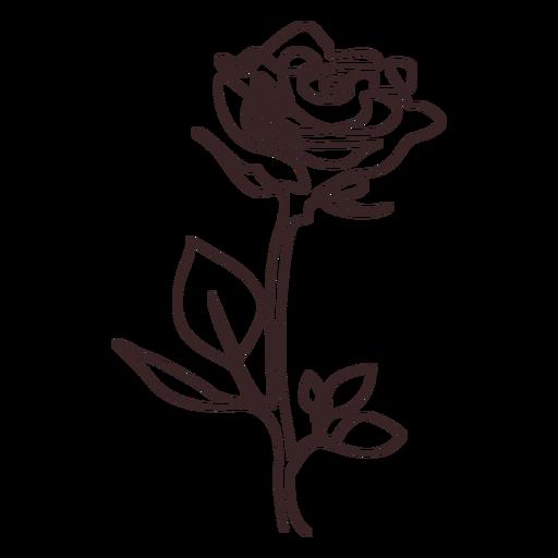 Planta frondosa flor de amapola Transparent PNG