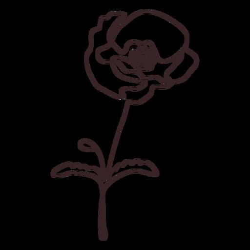 Poppy flower plant line drawing