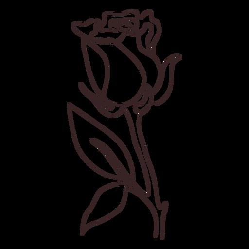 Rose plant line drawing stroke