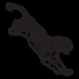 Tigre atacando un golpe de presa