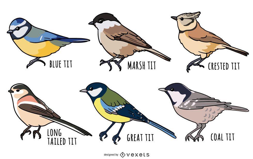 Conjunto de ilustración de aves tit