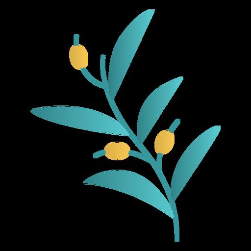 Diseño de la planta de olivo de Janucá Transparent PNG
