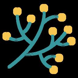 Tradição hanukkah de ramo de oliveira