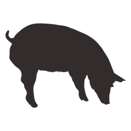 Silueta de cerdo que huele