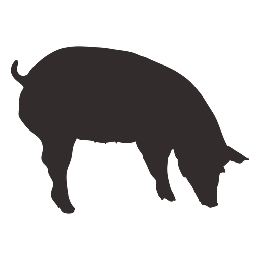 Smelling pig silhouette