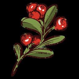 Ilustração do ramo de cranberries