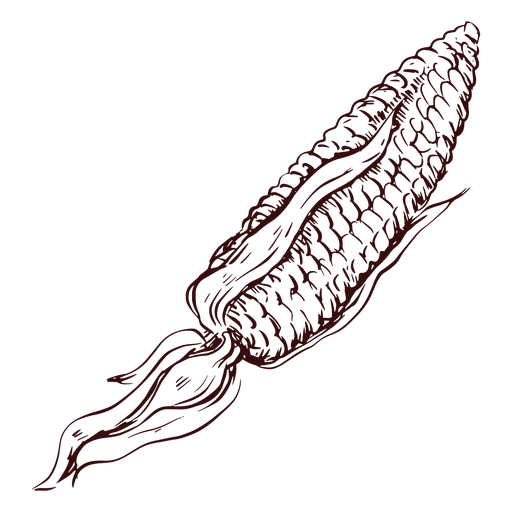 Detailed corn hand drawn