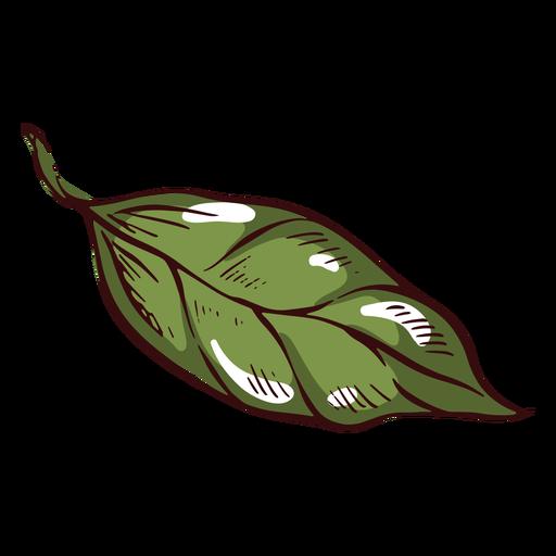 Detailed leaf illustration
