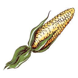 Detailed maize illustration