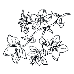 Ilustração em preto e branco do ramo das flores
