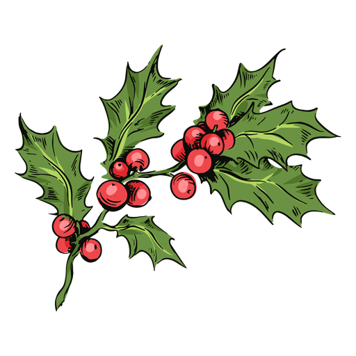 Mistletoe branch illustration Transparent PNG