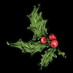 Mistletoe leaves illustration