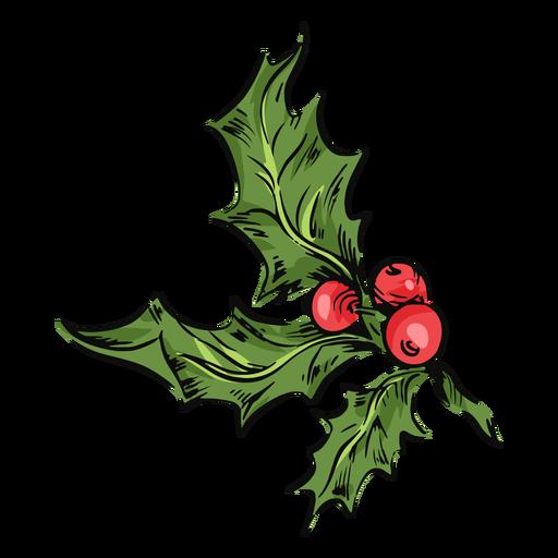 Ilustración de hojas de muérdago