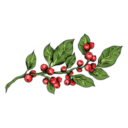 Mistletoe plant illustration