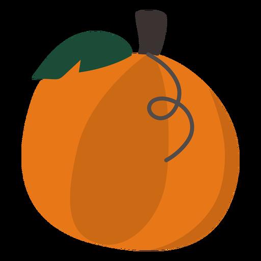 Pumpkin vegetable flat pumpkin