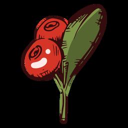 Thanksgiving cranberries illustration